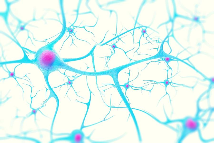 La combinaison de la thérapie génique avec une procédure de réparation chirurgicale permet de prolonger la survie des cellules nerveuses et de stimuler la régénération des fibres nerveuses (ou axones).