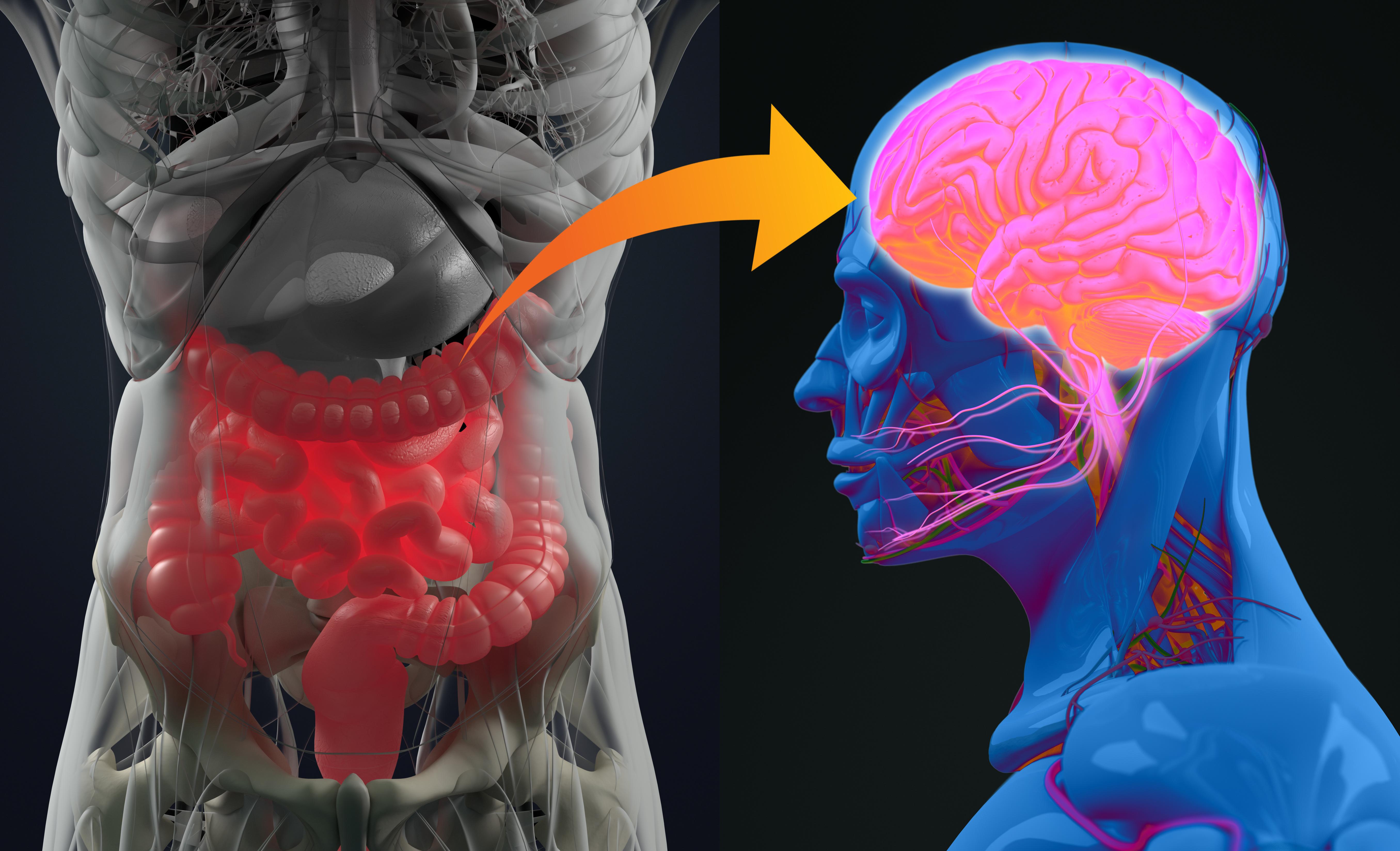 Cibler l'intestin avec un composé capable d'empêcher l'agrégation de protéine alpha-synucléine pourrait freiner le développement de la maladie de Parkinson