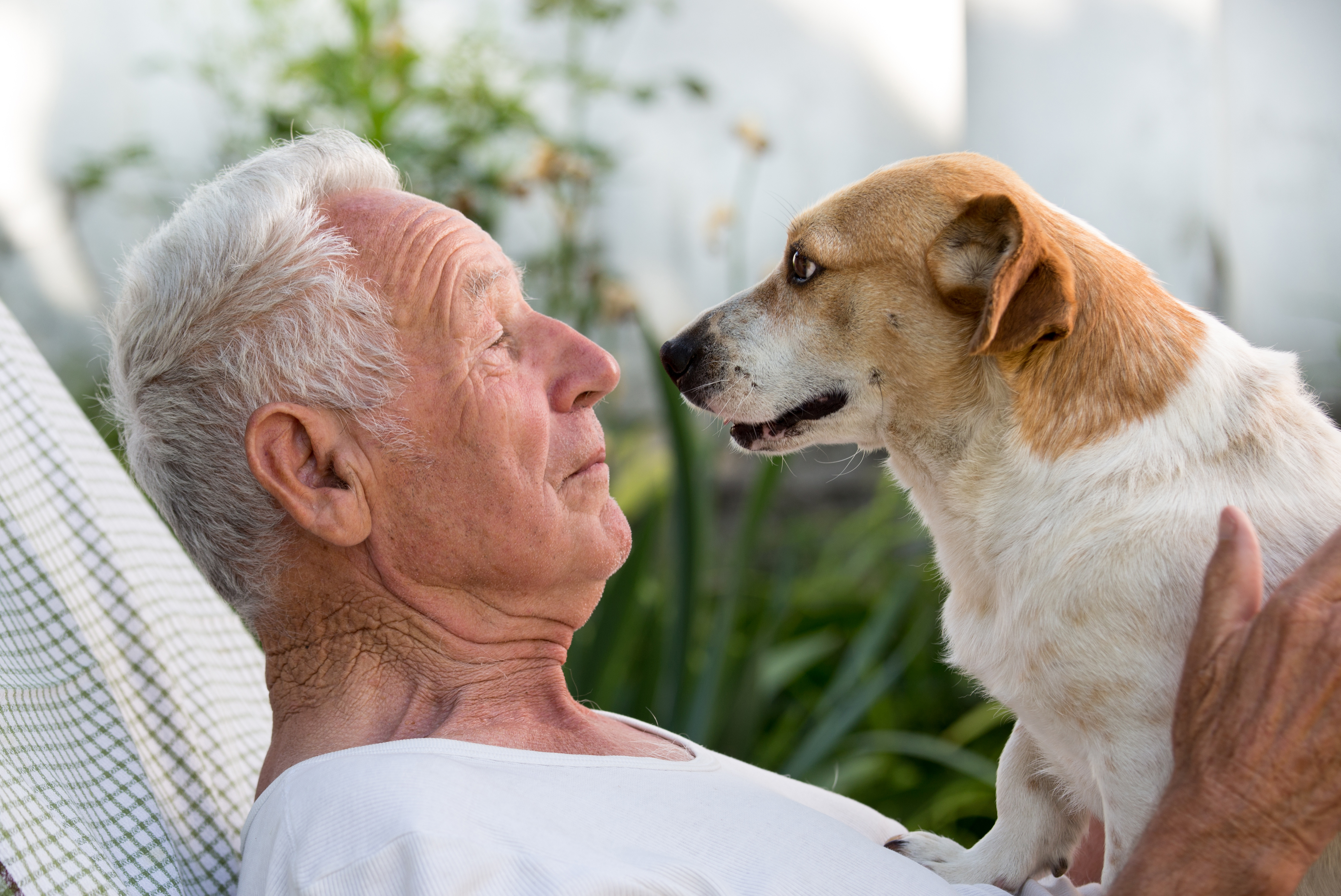 Pour vaincre la solitude imposée par la pandémie, de très nombreuses personnes âgées ont adopté un « animal de compagnie pandémique » ou « pandemic pet » (Adobe Stock 158731172)