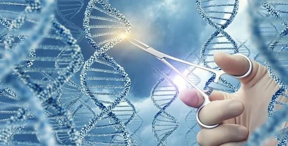 L'édition de base (ou prime editing), une variante plus récente et très sophistiquée de l'outil d'édition de gène CRISPR-Cas9 pourrait permettre de corriger in vivo les mutations de toutes les cellules musculaires du corps (Adobe stock 159700481)