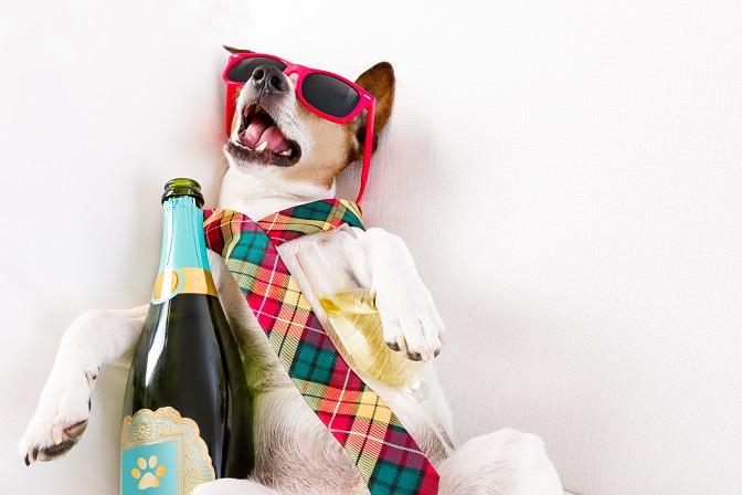 La migraine déclenchée par l'alcool est une « réalité », elle survient rapidement après la consommation de boissons alcoolisées, et selon un mécanisme différent de celui couramment appelé « gueule de bois ».