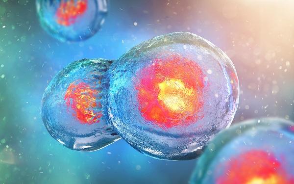 Le système permet de suivre de suivre l'évolution des cellules immunitaires dans le tissu tumoral