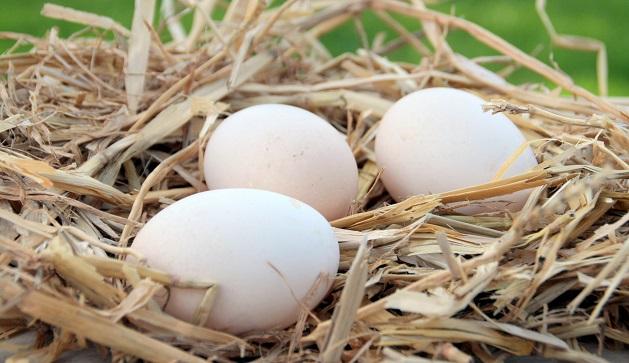 Un ou plusieurs œufs par jour et le risque de diabète augmente de 60% ? (Visuel Adobe Stock 179428456)
