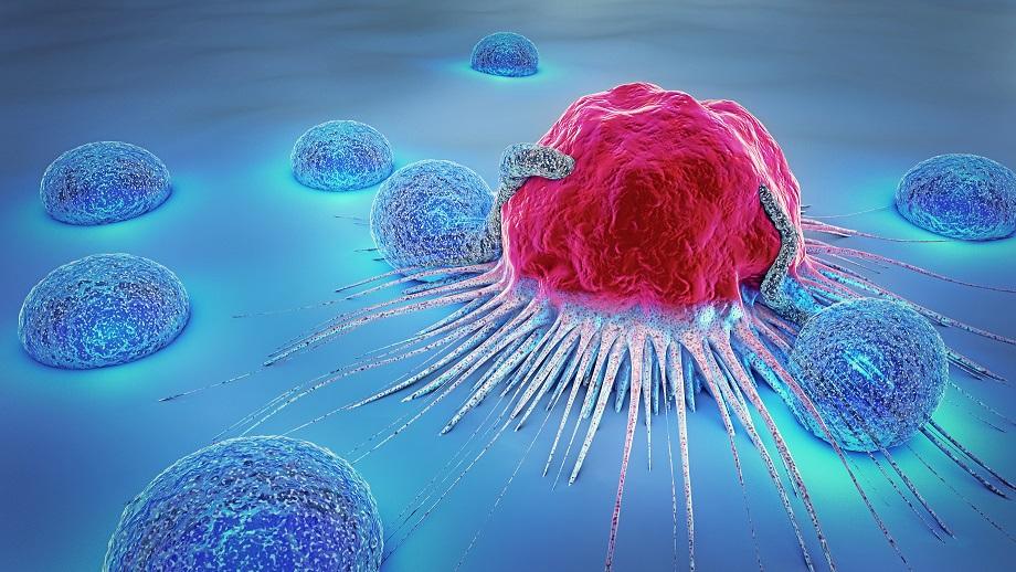 Cibler les cellules « zombies » sénescentes pourrait permettre d'augmenter la survie du cancer du col de l'utérus (Adobe Stock 183722536)
