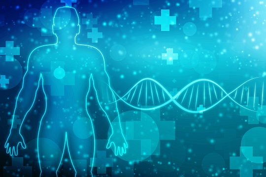 Rebooster les cellules souches musculaires pour traiter la dystrophie musculaire et le vieillissement musculaire