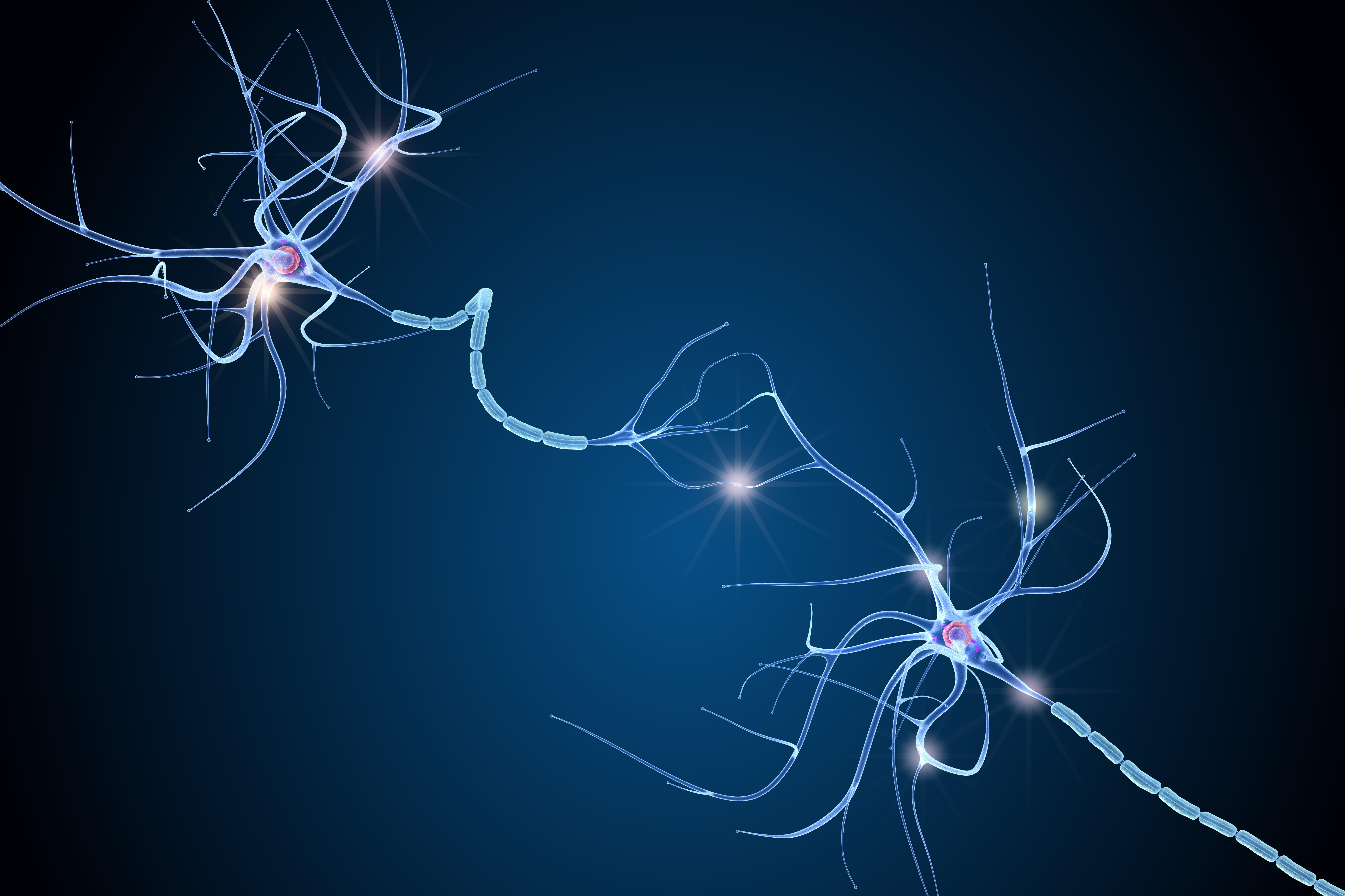 Mais que se passe-t-il dans un réseau neuronal, lorsqu'un neurone meurt ? (Visuel Adone Stock 224474654)