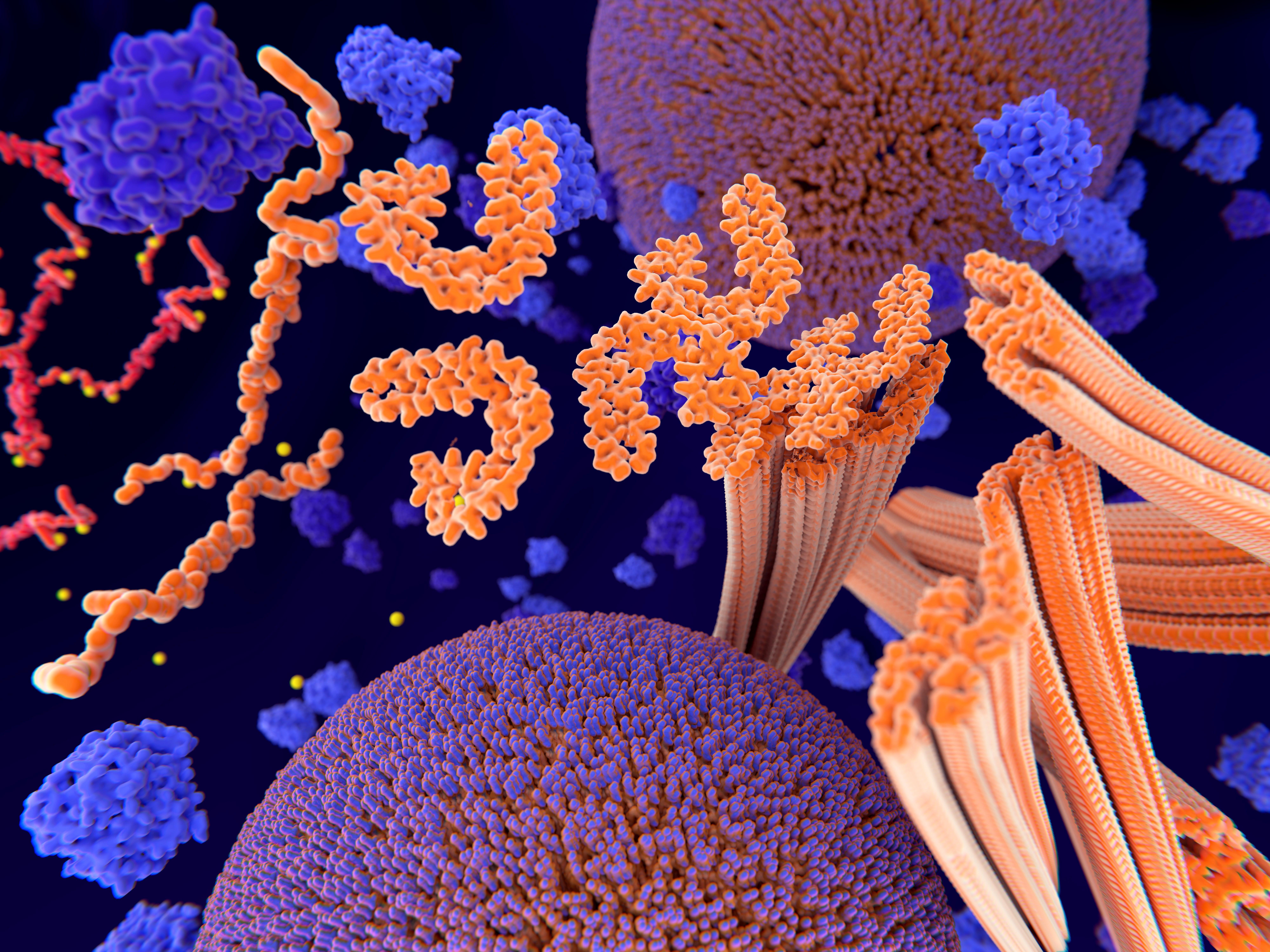 L'apparition et la progression de la maladie de Parkinson sont caractérisées par l'agrégation d'une protéine, l'α-synucléine humaine (αSyn) en plaque amyloïde toxique.