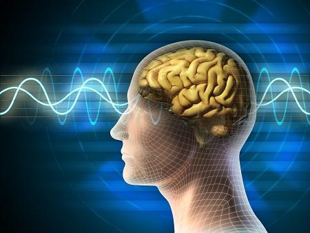 Les ondes delta émises pendant notre sommeil profond ne sont pas des périodes de repos pour le cortex
