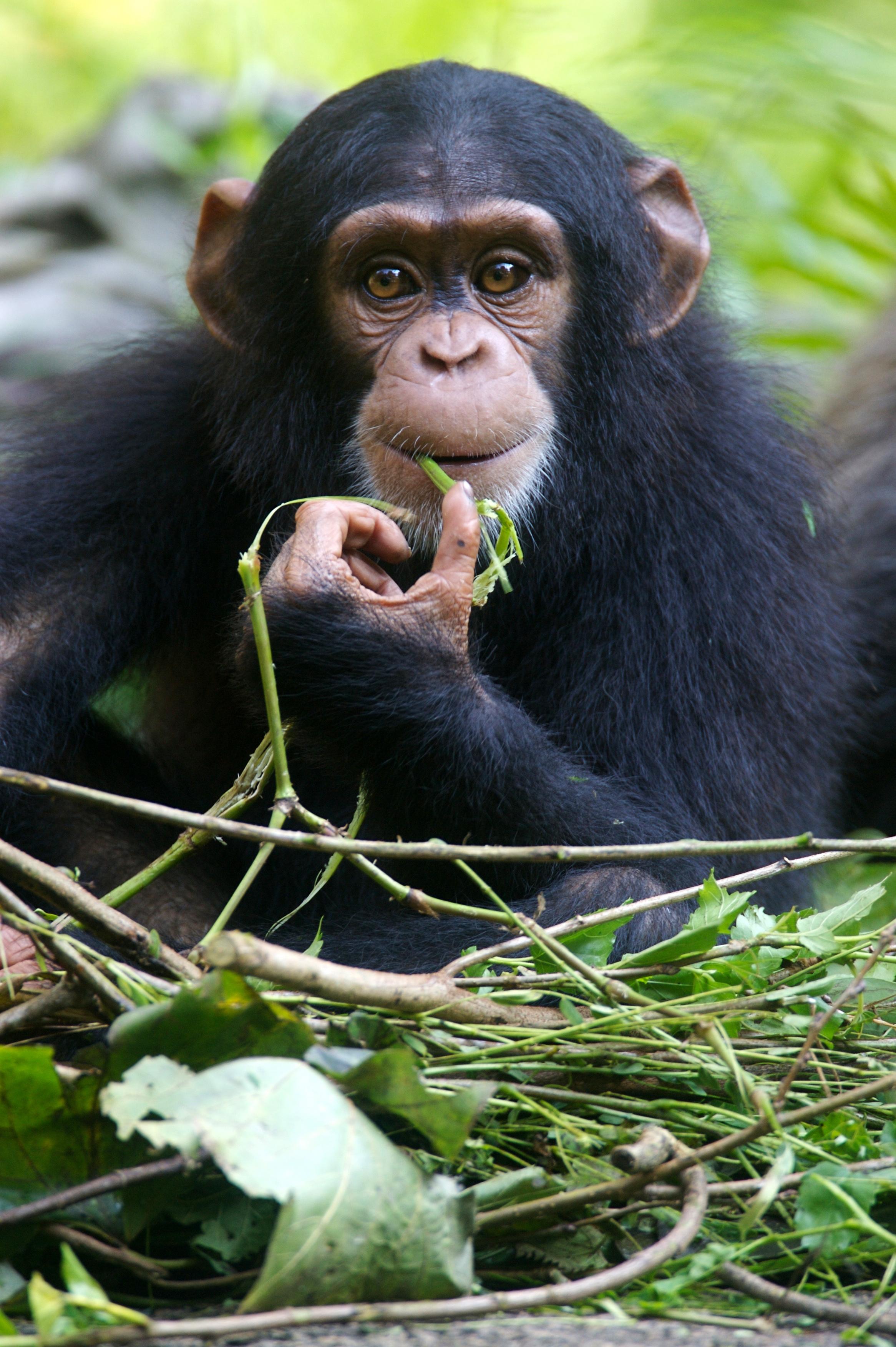 Sommes-nous finalement en train de reproduire un comportement de survie qui existe chez la plupart des espèces animales ? (Visuel Adobe Stock 4472217)