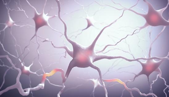 L'équipe de recherche identifie de mystérieuses structures cérébrales appelées réseaux périneuronaux, qui contribuent à moduler l'activité des impulsions électriques dans le cerveau.