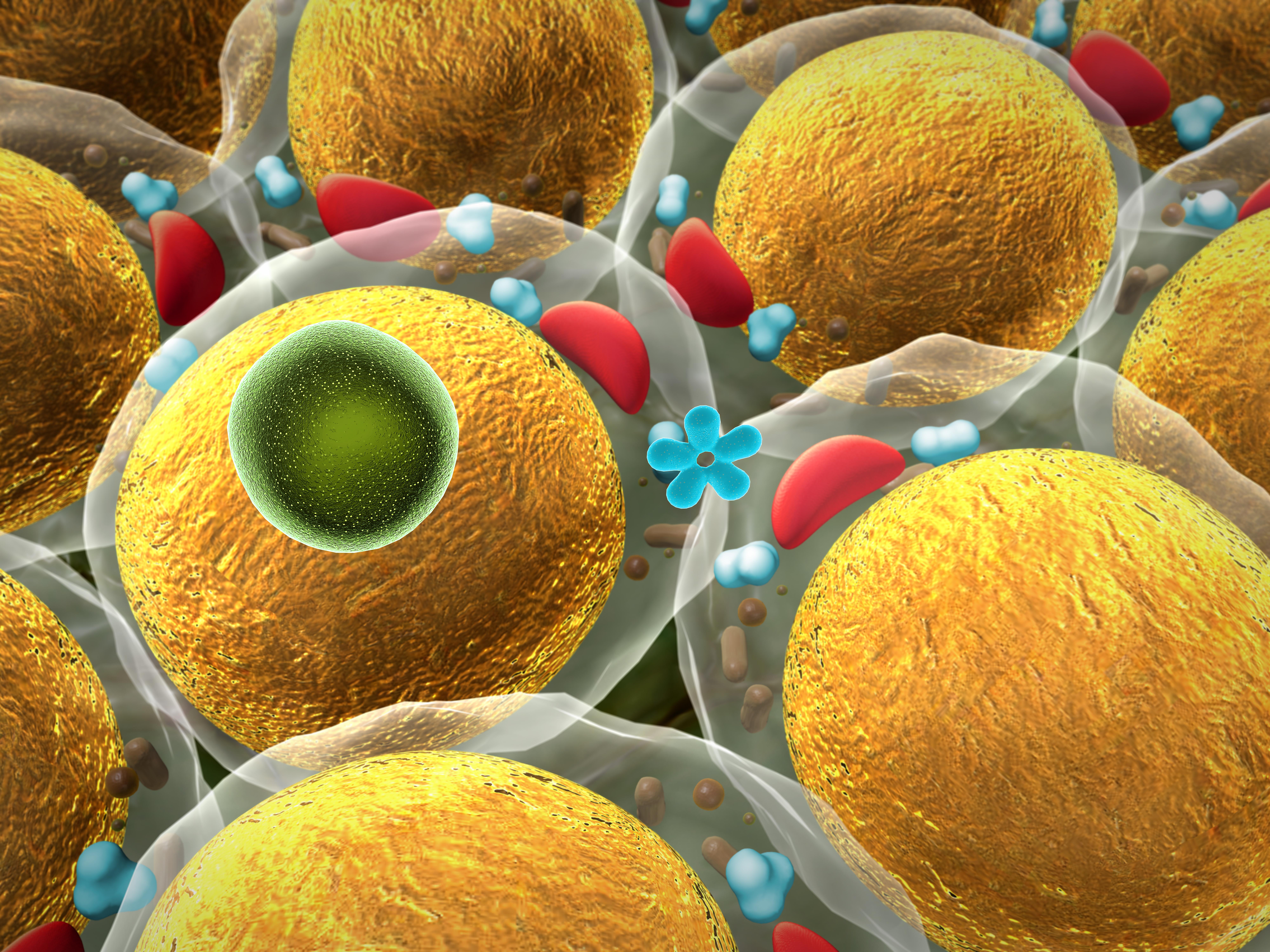 Les facteurs inflammatoires libérés par le tissu adipeux chez les patients COVID-19 peuvent être à l'origine de dommages au cœur, aux poumons et au système nerveux (Visuel Adobe Stock 71317843)