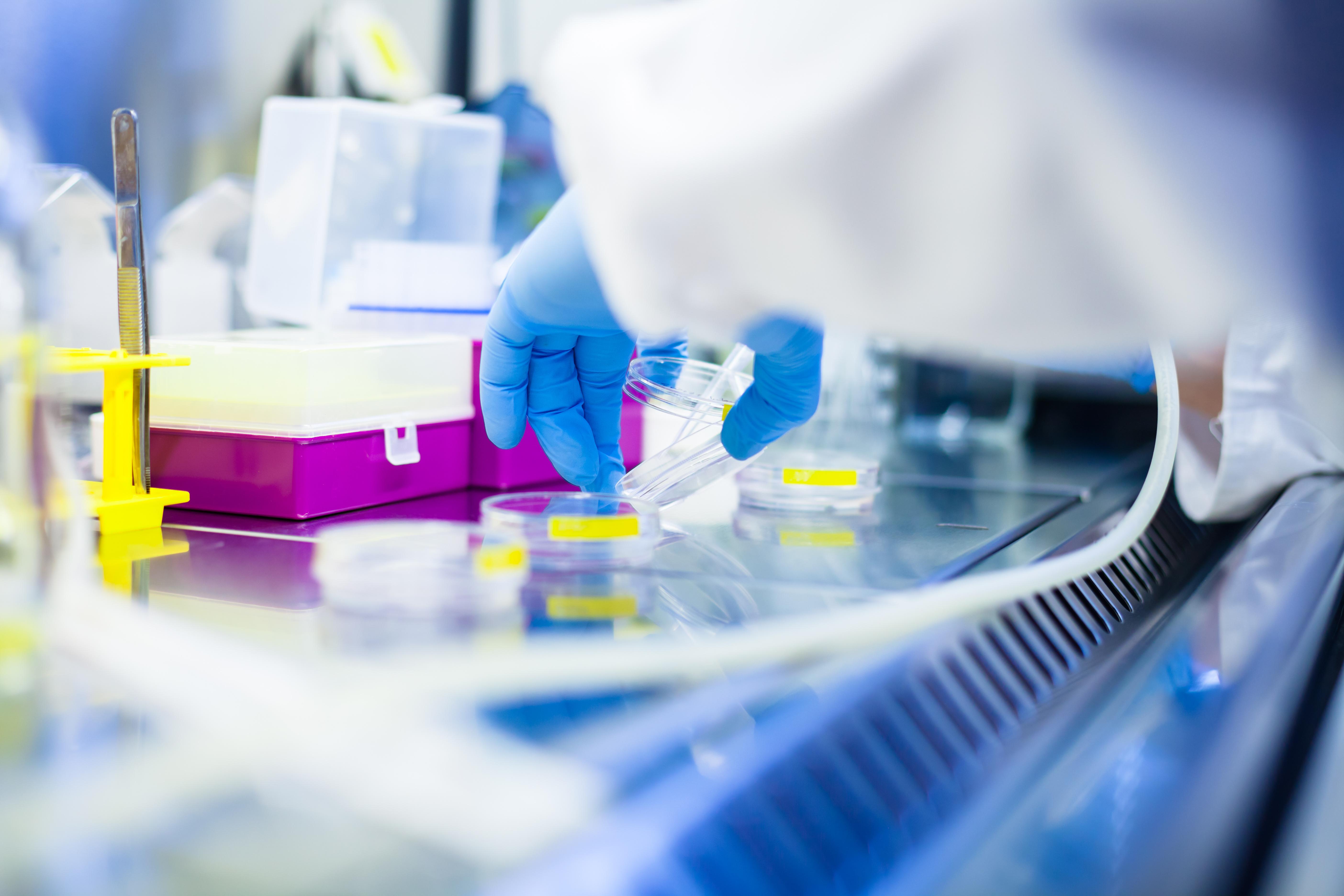 L'agent photothérapeutique, injecté une fois dans une souris modèle de tumeur,  s'accumule correctement autour de la tumeur puis est libéré, en continu, sur une période de 2 à 4 semaines (Visuel Adobe Stock 81147255)