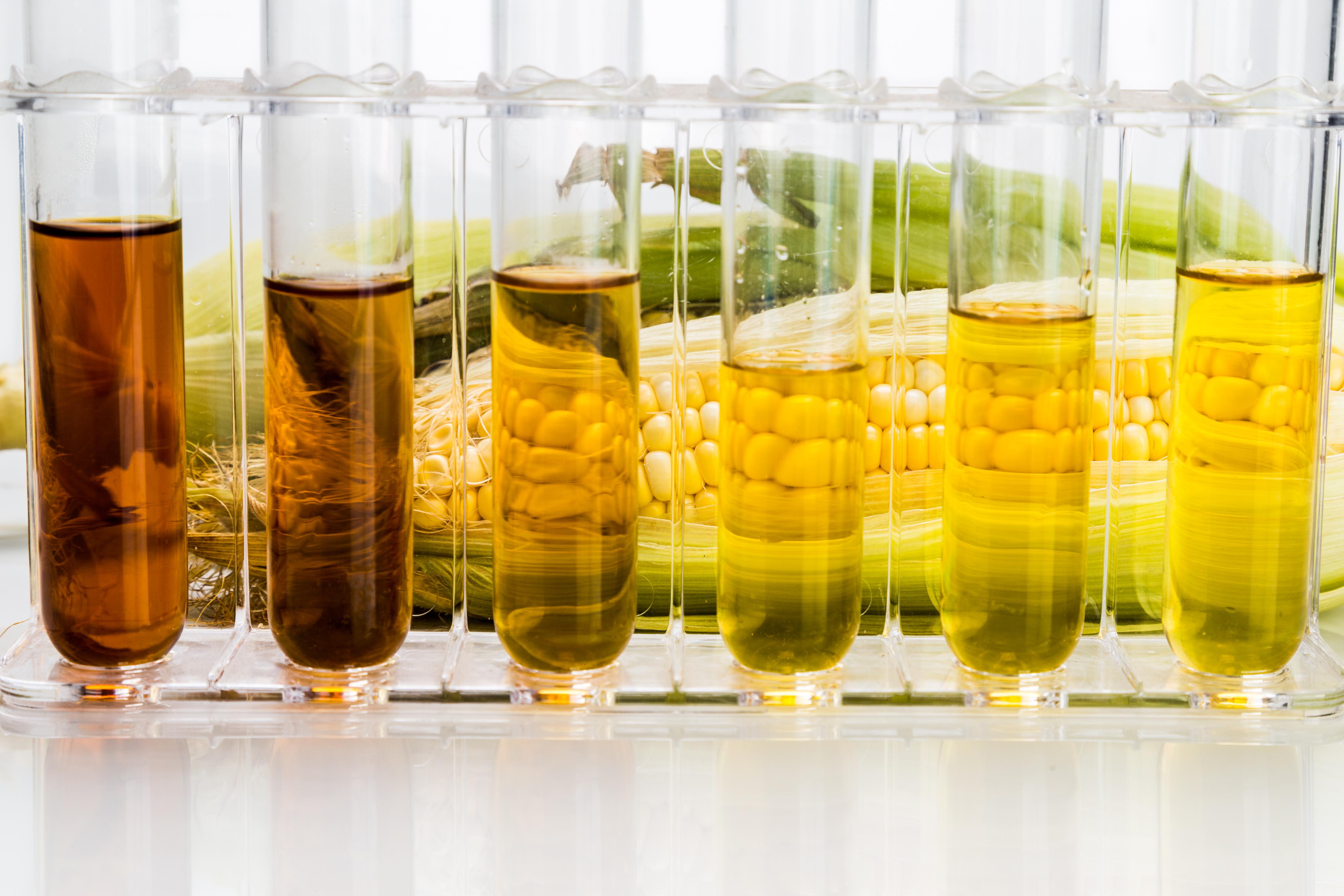 Des apports élevés de fructose peuvent empêcher le bon fonctionnement du système immunitaire (Visuel Adobe Stock 92904091).
