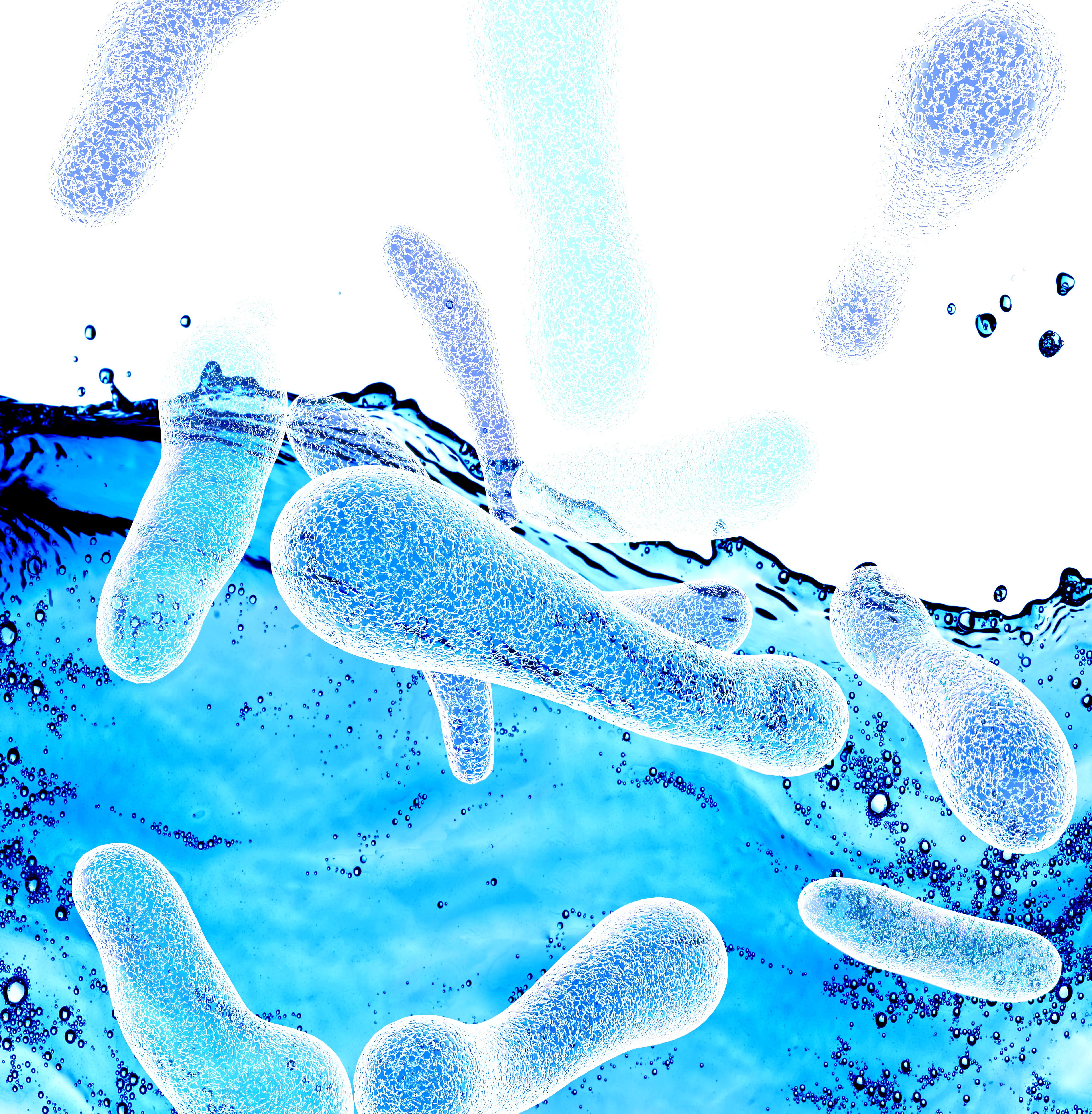 Certaines bactéries du microbiote intestinal peuvent s'accumuler dans les tumeurs et améliorer l'efficacité de l'immunothérapie.