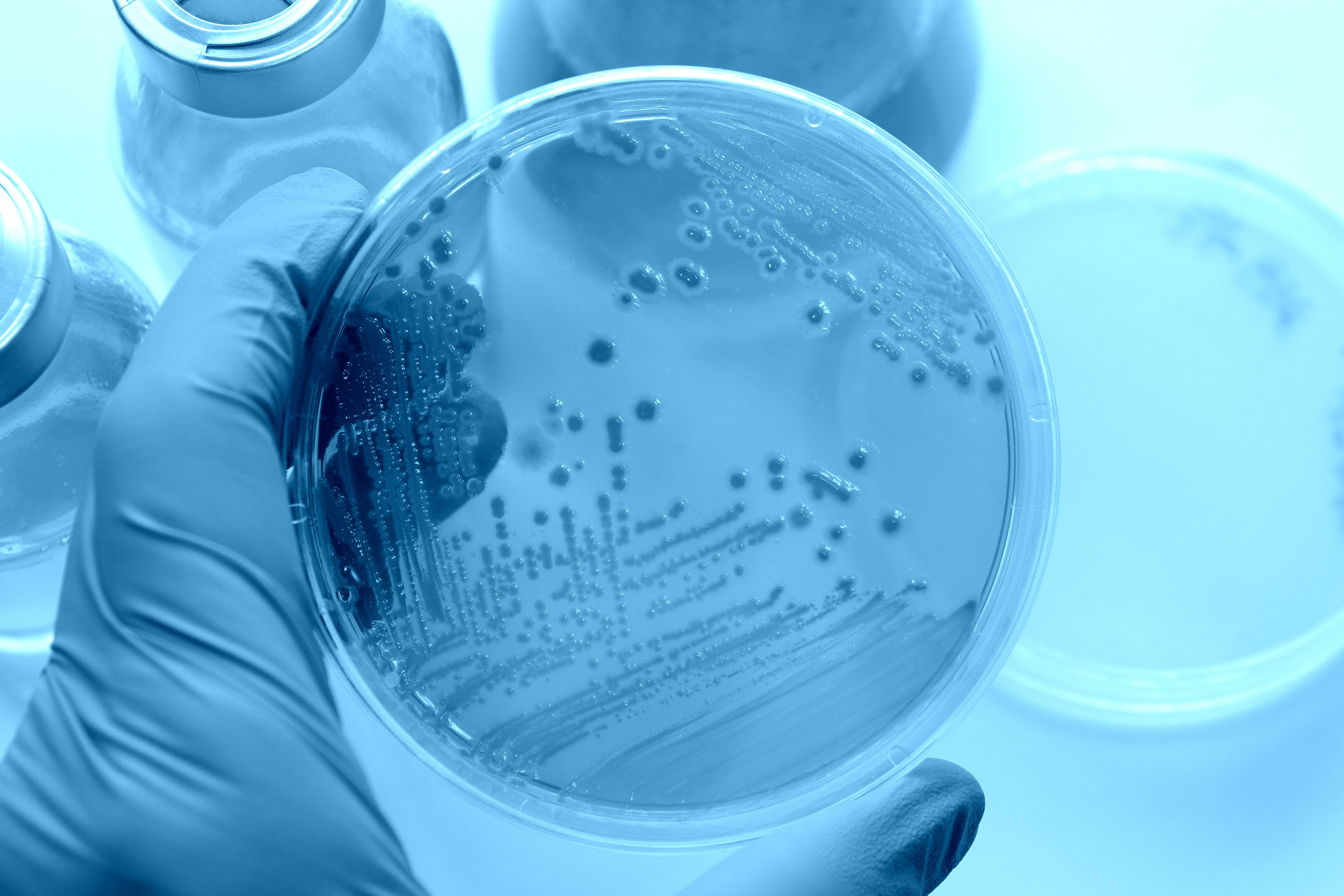L'efficacité du vaccin dépend, en partie, du microbiote intestinal (Visuel Adobe Stock 78527054)