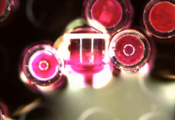 Il s'agit d'un ensemble de micro-dispositifs cylindriques emballés dans des capsules de gélatine miniatures, recouvertes d'une couche protectrice pour empêcher la digestion dans l'environnement acide de l'estomac (Visuel ACS Nano)