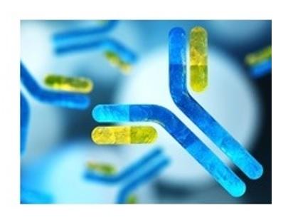 Les cellules dépourvues de Sprouty 1 et 2 ont ainsi un potentiel immense non seulement pour lutter contre les tumeurs, mais aussi contre les infections virales chroniques