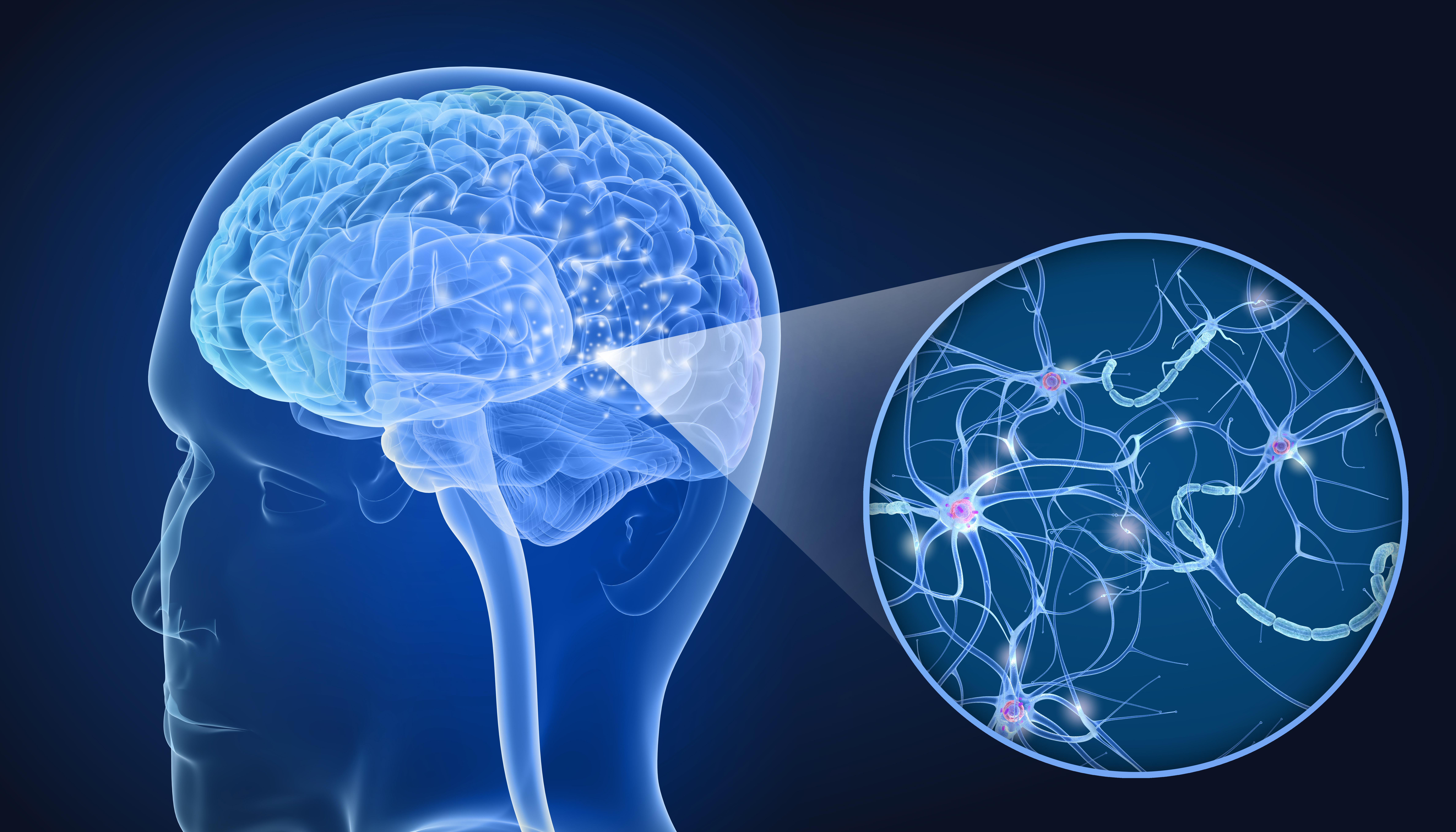 La colle cérébrale protège contre la perte de tissu cérébral après une blessure ou un trauma cérébral grave, mais contribue également à la réparation neuronale fonctionnelle (Visuel Adobe Stock 206037348)