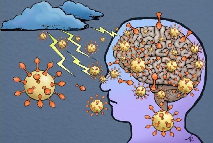 La protéine de pointe, S1, passe la barrière hémato-encéphalique et amène le cerveau à libérer des agents inflammatoires qui provoquent une tempête dans le cerveau (Visuel Alice Gray).