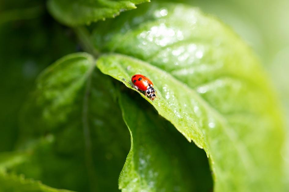 Les écosystèmes freinent naturellement le transfert de maladies des animaux aux humains (Visuel AdobeStock_353085448)