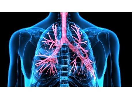 L'asthme lié à obésité serait en plus de l'inflammation pulmonaire, lié au rétrécissement des voies aériennes