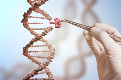 """Il serait possible de favoriser la longévité en stoppant, au bon moment, certains gènes """"de l'autophagie"""""""