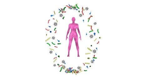 c'est en restaurant l'expression de la protéine interleukine-22 (IL-22), que les fibres fermentescibles favorisent cette croissance de « bonnes » bactéries dans le côlon