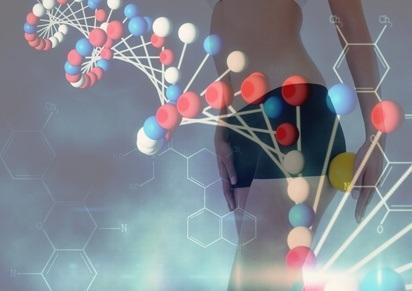 L'étude révèle ici un rôle positif de l'ADN satellite, un type de « junk DNA », dans la cohésion du génome.