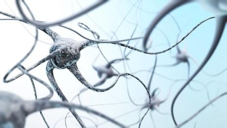 Les neurones changent de taille au cours de la maladie, comme s'ils cherchaient à compenser leur perte de fonction