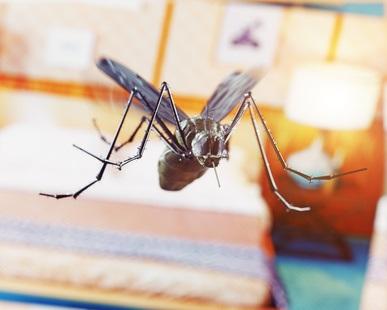 Une nouvelle souche de la bactérie Wolbachia bloque fortement chez les moustiques infectés la transmission des 2 virus, de la dengue et Zika, et offre ainsi une alternative prometteuse de contrôle viral.