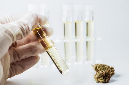 Les deux principaux « principes actifs » du cannabis, le cannabidiol (CBD) et le Δ-9-tétrahydrocannabinol (THC) se compensent d'une certaine manière