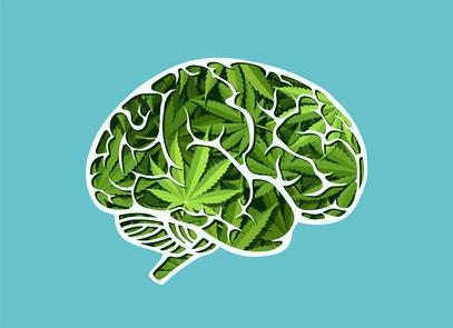 L'étude constate une activation corticale accrue chez les consommateurs de cannabis à l'état de repos
