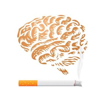 « Cette variante affecte la quantité de formation d'un récepteur de la nicotine dans le cerveau »