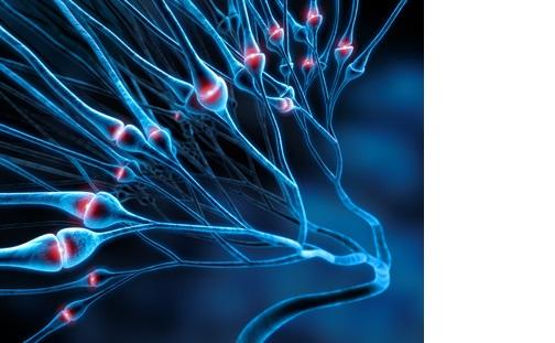 Chaque souvenir individuel est matérialisé par une plasticité synaptique spécifique