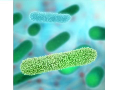 Les niveaux d'akkermansia sont significativement réduits avec la combinaison œstrogène-bazédoxifène