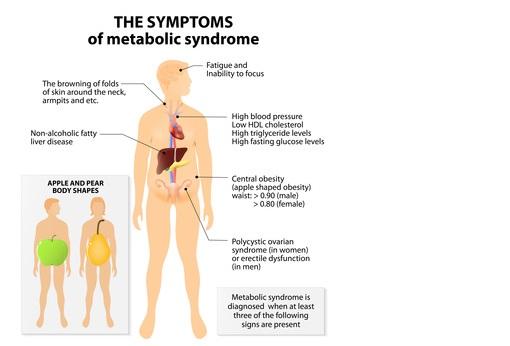 Les souris mâles développent, comme les hommes, un syndrome métabolique (cf visuel) dont le diabète de type 2, une insensibilité à l'insuline et des marqueurs de troubles vasculaires