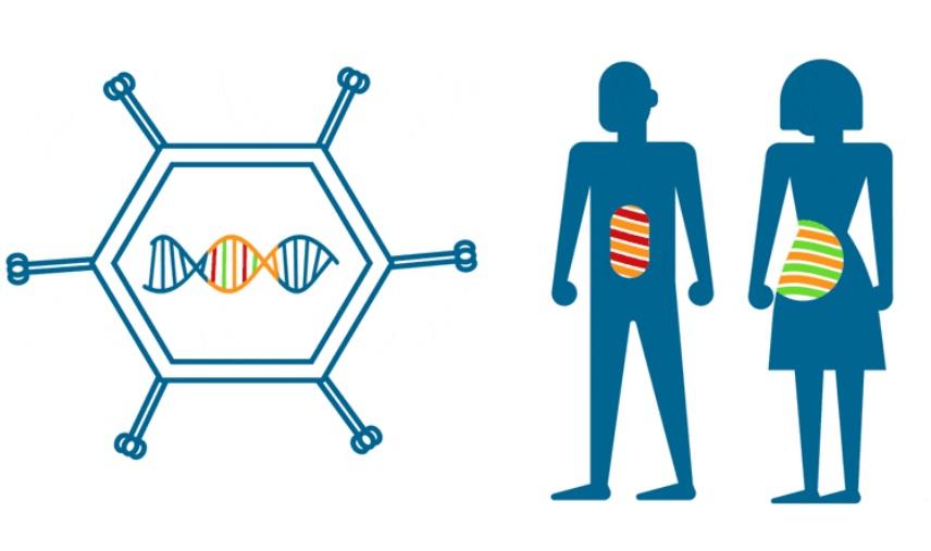 L'objectif de ces vaccins ou immunothérapies est d'aider le système immunitaire à cibler les cancers au tout début de leur développement (Visuel Nouscom)