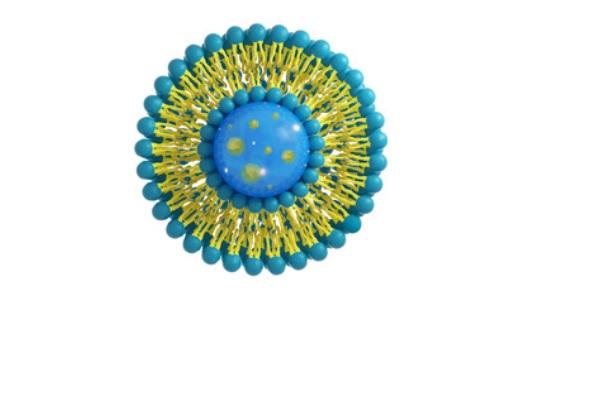 Cette immunothérapie consiste à donner aux cellules dendritiques, gardiennes et chefs d'orchestre du système immunitaire, de petites bulles de graisse ou liposomes, qui vont calmer et relancer le système immunitaire et freiner le processus pathologique.