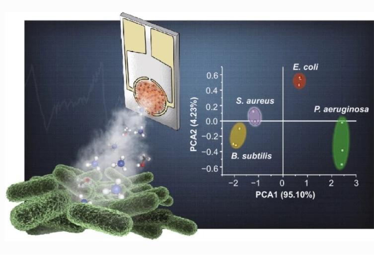 Ce nez artificiel permet une surveillance bactérienne continue y compris à travers les métabolites volatils émis dans l'air (Visuel Nano-Micro Letters).