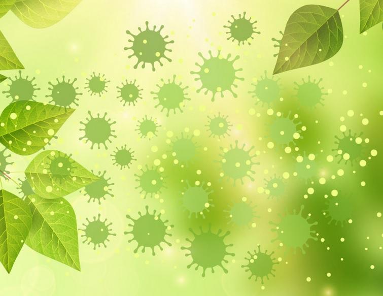 Les pollens en synergie avec l'humidité et la température, expliquent 44% de la variabilité du taux d'infection.(Visuel Columbia Mailman School of Public Health )