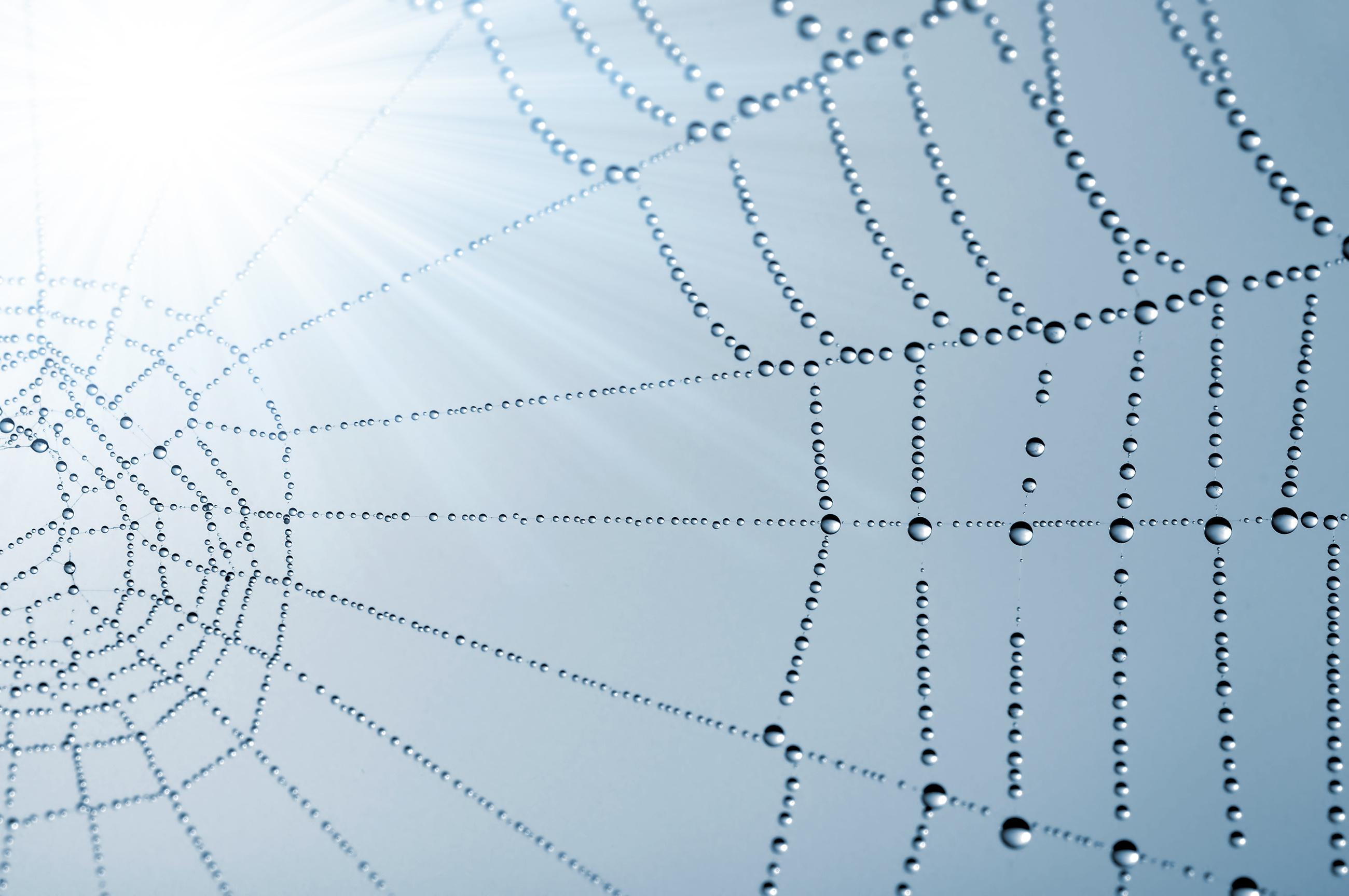 Les protéines de soie d'araignée sont combinées avec différentes nanostructures afin d'optimiser leurs propriétés biomédicales naturelles (Visuel AdobeStock_45555769).