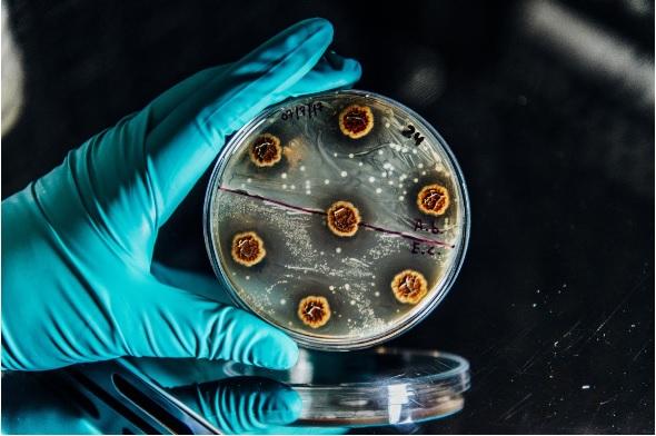 En identifiant les sources génétiques ou mutations à l'origine de la résistance du pathogène multirésistant Pseudomonas aeruginosa, cette équipe a peut-être trouvé le moyen de lutter contre ces résistances, de rétablir l'efficacité des antibiotiques