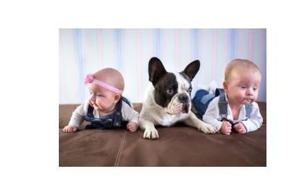 L'association exposition- risque réduit est similaire en cas d'exposition aux allergènes des chiens.