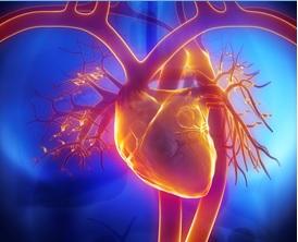 Ce gène, LeXis, abaisse le cholestérol et dissipe les blocages dans les artères