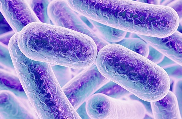 Ces « microbes graisseux » car ils produisent tellement de lipides qu'ils en perdent constamment de minuscules vésicules de lipides à double effet sur les vaisseaux sanguins