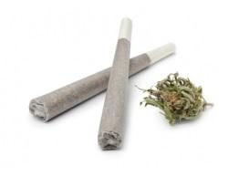 La consommation de cannabis chez les adolescents n'est pas sans risque pour le développement cognitif et c'est le principal effet nocif documenté dans la littérature.