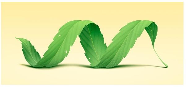 La plante biosynthétise des molécules antalgiques 30 fois plus puissantes, que l'Aspirine pour réduire l'inflammation