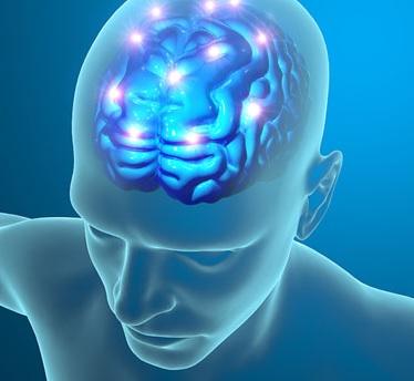 Les premières preuves de changements structurels dans le cerveau dès l'âge adulte