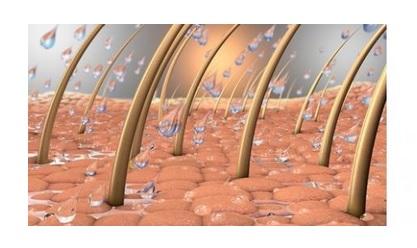 Cette équipe du NYU Langone Health parvient à un processus de réparation de la peau qui comprend la repousse des poils sur la peau blessée