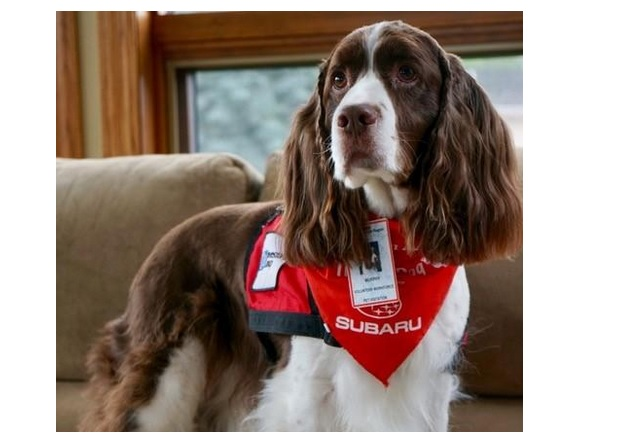 La compagnie d'un chien peut réduire la détresse des patients en attente de soins hospitaliers d'urgence.